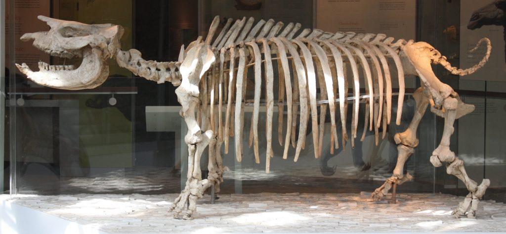 ancient rhinoceros