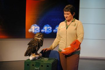 Susan Summer and a Great Horned Owl